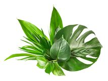Various tropical leaves. On white background Stock Image