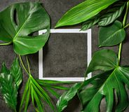 Various tropical leaves and white paper frame. On dark grey table, top view Royalty Free Stock Images