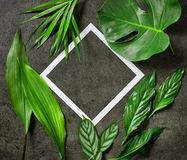 Various tropical leaves and white paper frame. On dark grey table, top view Stock Photo