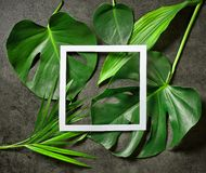 Various tropical leaves and white paper frame. On dark grey table, top view Royalty Free Stock Image
