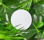 Various tropical leaves and white paper frame. Top view Royalty Free Stock Photo