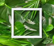 Various tropical leaves and white paper frame. Top view Stock Photo