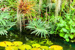 Various tropical plants background Royalty Free Stock Photo