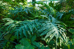 Various tropical plants. royalty free stock photography