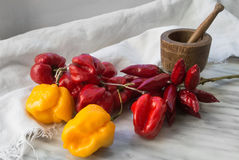 Various type of dried chili peppers Stock Photos