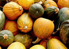 Various type of pumpkins. Forms royalty free stock photography
