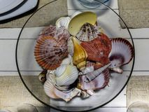 Various Type of Sea Shell Cover in Glass Bowl Royalty Free Stock Images