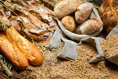 Various types of bread in a baker pantry Stock Photography