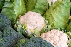 Various types of cabbage. Fresh cauliflower, broccoli and cabbage Stock Photography