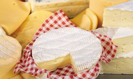 Various types of delicious cheese. Close up Stock Photography