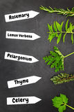Various types of herbs Royalty Free Stock Photo
