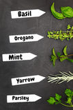 Various types of herbs Royalty Free Stock Photography