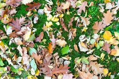 Various leaves fallen on grass royalty free stock image