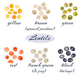 Various types of lentils Royalty Free Stock Photography