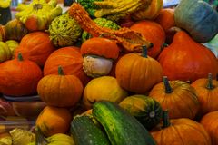 Various types of multi-colored pumpkins sold in the bazaar. A great choice for Halloween royalty free stock images