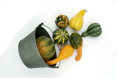 Free Various Types Of Ornamental Squash Fall From A Bucket Royalty Free Stock Photo - 126541845