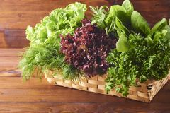 Various types of salad leaves in wooden box on wooden background stock images
