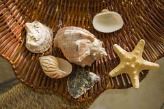 Various types of Sea shells over straw background Stock Photo