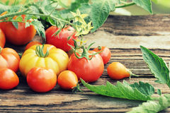 Various types of tomatoes Stock Photos