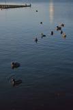 Various types of Water birds Stock Photo