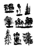 Various vector trees Stock Image