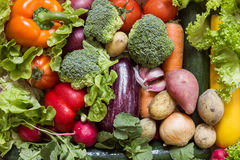 Various vegetables with fresh green royalty free stock image