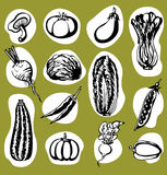 Various Vegetables Set Royalty Free Stock Images