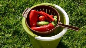 Various vegetables watering in  bucket. Various vegetables watering in the bucket stock footage