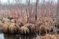 Various vegetation in protected wetlands Stock Photo