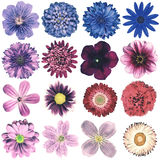 Various Vintage Retro Flowers Collection Isolated on White Royalty Free Stock Image