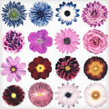 Various Vintage Retro Flowers Collection Isolated on White Royalty Free Stock Images