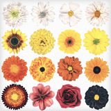 Various Vintage Retro Flowers Collection Isolated on White Stock Image