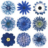 Various Vintage Retro Flowers Selection Isolated on White royalty free stock photo