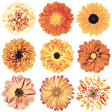 Various Vintage Retro Flowers Selection Isolated on White Stock Photos