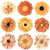 Various Vintage Retro Flowers Selection Isolated on White Stock Photos