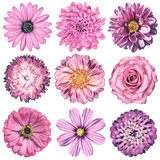 Various Vintage Retro Flowers Selection Isolated on White Royalty Free Stock Photography