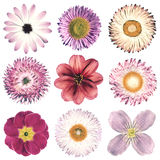 Various Vintage Retro Flowers Selection Isolated on White Stock Photo