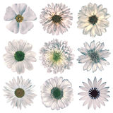Various Vintage Retro Flowers Selection Isolated on White Royalty Free Stock Photos