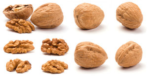 Various Walnuts. Group of walnuts  on a white background stock image
