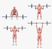 Various weight lifting / bodybuilding postures Royalty Free Stock Photography