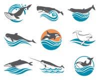 Various whales set Stock Photo