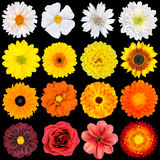 Various White, Yellow, Orange and Red Flowers Royalty Free Stock Photos