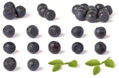 Various wild blueberries. (bilberry) (Vaccinium myrtillus) and green leaves on white background. Macro, shallow focus royalty free stock images