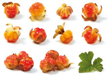 Various wild cloud-berries Stock Image