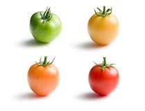 Variously ripe tomatoes Royalty Free Stock Photos