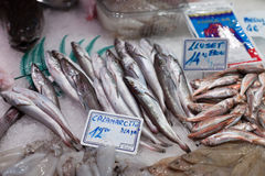 Varity of frozen fish at a market stall, La Royalty Free Stock Image