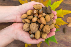 Variuos nuts in hands Stock Photo