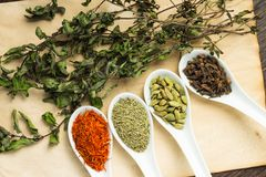Variuos of Spices with branch of dried Mint Stock Photography