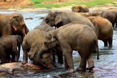 varje elefant annat spelrum till Arkivfoton