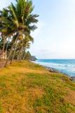 Varkala Coast Grass Palm Trees Ocean V Royalty Free Stock Images